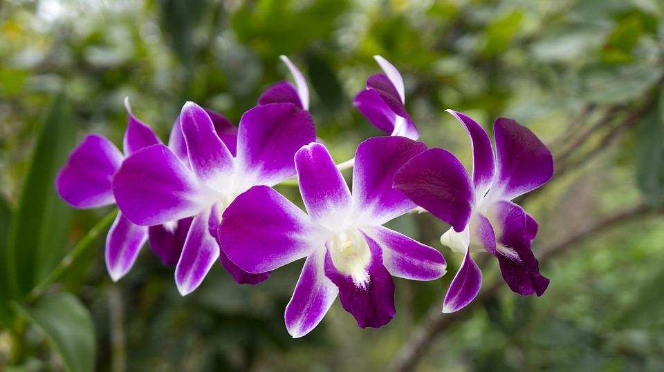 orchids 3055481 960 720